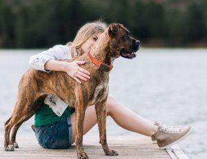 Pourquoi acheter un collier GPS pour chien? notre réponse